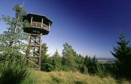 Aussichtsturm im Wald mit blauem Himmel