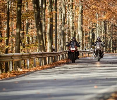 2 Motorradfahrer umgeben vom Herbstwald