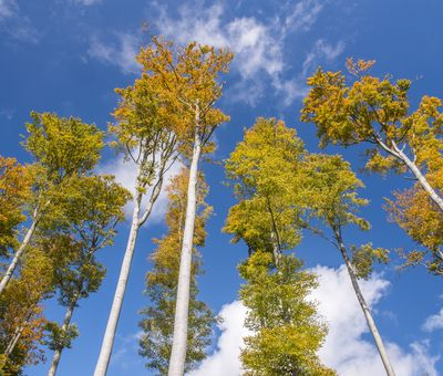 Herbstbäume vor blauem Himmel